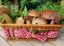 How to grow mushrooms indoors | Types and Method