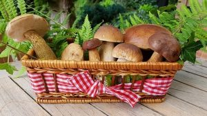 How to grow mushrooms indoors
