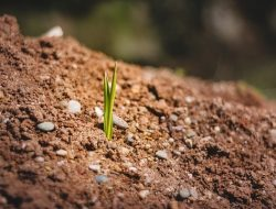 What is soil organic matter, Its functions