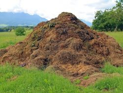 Farm Yard Manure one of the types of natural fertilizers