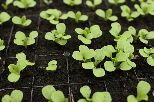 Types of Nursery in Agriculture