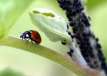 Natural Pest Control Methods in Agriculture