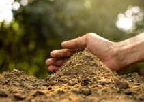 5 Types of Biofertilizers | Their Examples, Uses and Application Techniques