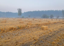 Crop Residues, their Types, Management and Uses